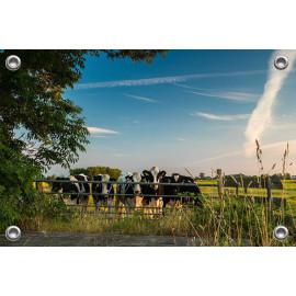 Tuinposter © René Groenendijk - Koeien in de Wei Holland (6226.1070)