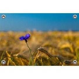 Tuinposter © René Groenendijk - Paarse Korenbloem tussen het Koren (6226.1084)