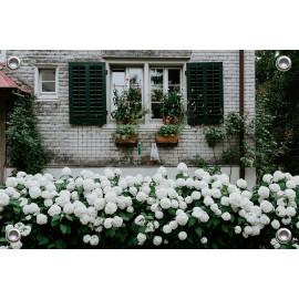 Tuinverruimer-Schuttingposter  - Wit Huis met Witte Hortensia  (5054.1078)
