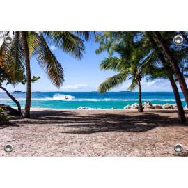 Tuinposter Strand met Palmbomen (5051.3001)