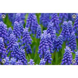 Tuinposter-Schuttingposter Blauwe Druifjes (5020.3005)