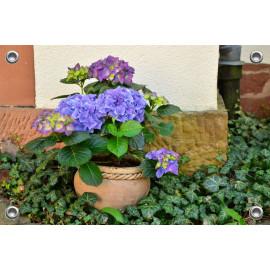 Tuinposter-Schuttingposter Pot met Hortensia (5020.3009)