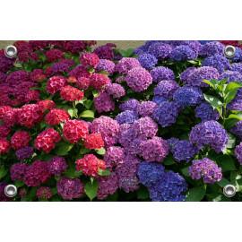 Tuinposter-Schuttingposter Roze en blauwe Hortensia (5020.3010)