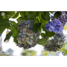 Tuinposter-Schuttingposter Blauwe Hortensia (5020.3011)