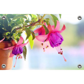 Tuinposter-Schuttingposter Fuchsia (5020.3012)