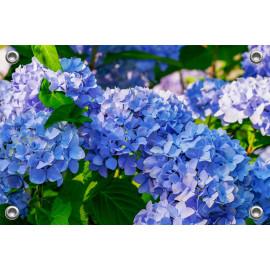 Tuinposter-Schuttingposter Blauwe Hortensia (5020.3013)