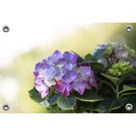 Tuinposter-Schuttingposter Paarse Hortensia (5020.3014)