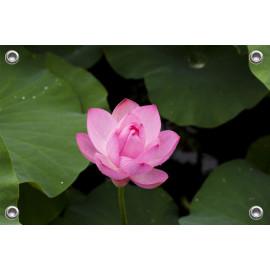 Tuinposter-Schuttingposter Lotusbloem (5020.3015)