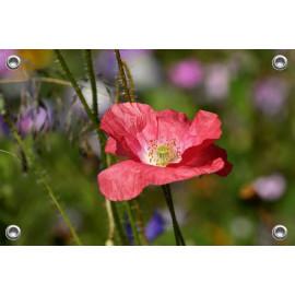 Tuinposter-Schuttingposter Veldbloem (5020.3019)
