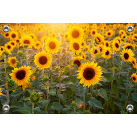 Tuinposter-Schuttingposter Zonnebloemen (5020.3021)