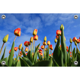 Tuinposter-Schuttingposter Tulpenveld (5020.3022)
