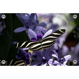 Tuinposter-Schuttingposter Vlinder zwart wit gestreept (5020.3029)