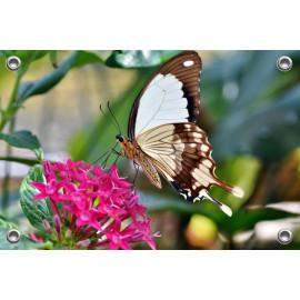 Tuinposter-Schuttingposter Vlinder op Bloem (5020.3030)