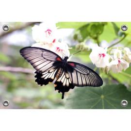 Tuinposter-Schuttingposter Vlinder op Geranium (5020.3031)