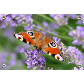 Tuinposter-Schuttingposter Vlinder op Sering (5020.3032)