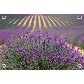 Tuinposter-Schuttingposter Lavendelveld (5020.3033)