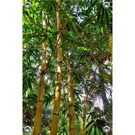 Tuinposter bamboe  (5050.3010)