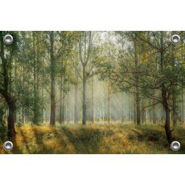 Tuinposter Zonlicht door de bomen (5050.3043)