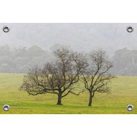Tuinposter Bomen op...
