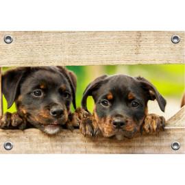 Tuinposter Puppy's door schutting (5070.3003)