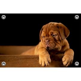 Tuinposter Bulldog Puppy (5070.3004)