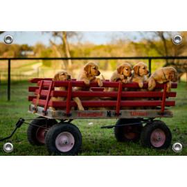 Tuinposter Kar met puppy's (5070.3006)