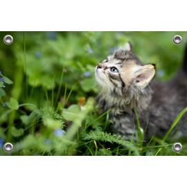 Tuinposter Kitten in tuin (5070.3008)