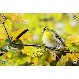 Tuinposter Gele Grasmus (5070.3009)