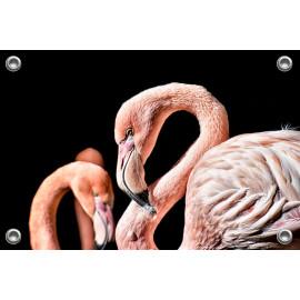 Tuinposter Flamingo (5070.3011)