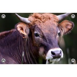 Tuinposter Koe (5070.3021)