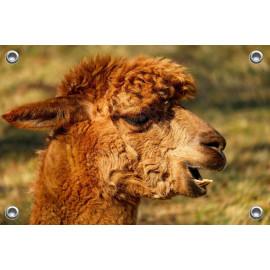 Tuinposter Alpaca Bruin (5070.3026)