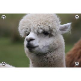Tuinposter Alpaca Wit (5070.3027)