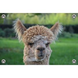 Tuinposter Alpaca Beige (5070.3028)
