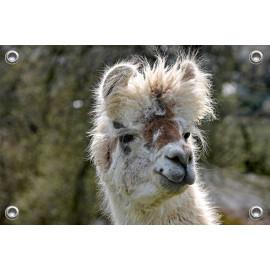 Tuinposter Alpaca met Kuif (5070.3029)