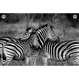 Tuinposter Zebra's (5070.3037)