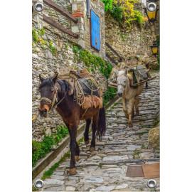 Tuinposter Muildieren op straat Griekenland (5090.3044)
