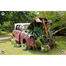 Tuinposter Vintage Auto in Tuin (5096.3001)