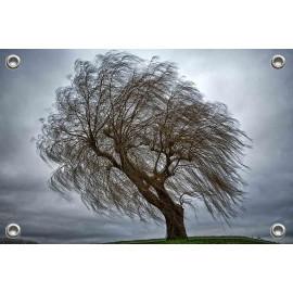 Tuinposter © Glenn Aoys - Treurstorm (6210.1003)