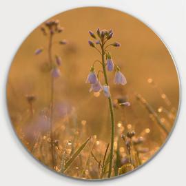 Muurcirkel © Monique Milder - Dauw op bloemen-Zonsopkomst (6228.2033)